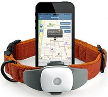 GPS Ошейник для кошек