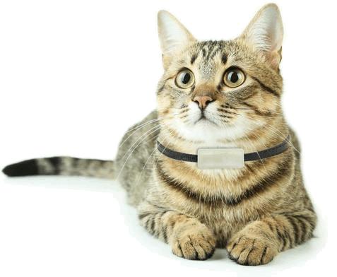 GPS-трекер для кошек