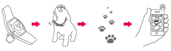 Особенности трекеров для кошек и собак